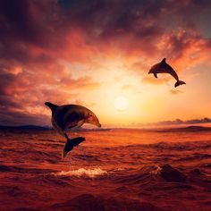The great playful sea II by Caras Ionut on 500px