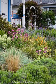 No grass yard on pinterest no grass backyard no grass for Ornamental grasses for front yard