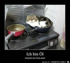 I am oil, throw the fish on it - Lustige Tiere Hund - Animal Memes, Funny Animals, Cute Animals, Animal Humor, Funny Cat Memes, Dog Memes, Crazy Cat Lady, Crazy Cats, I Love Cats
