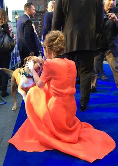 "I love that Woody got to attend the premiere of his movie :)‏ @Working_Title: ""#TomHardy is joined by his dog Woody on the @LegendFilmUK blue carpet! #EmilyBrowning shows #TomHardy's dog Woody some..."