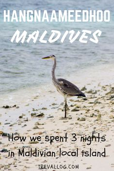 As budget travelers, we spent 3 days in a local island in Maldives called Hangnaameedhoo. Here's how we enjoy the mini island. #maldives #budgettravelMaldives #maldivesislands