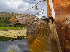 Le foto del giorno, marzo 2014. Paul Nicklen su National Geographic