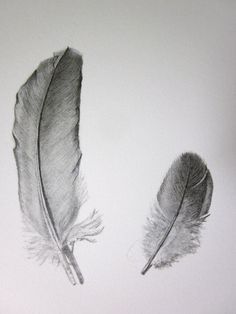 feathers original pencil drawing