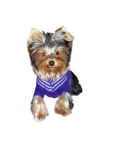 Dog Sweater Hand Knit sweater Custom made dog by PepperPetWear Hand Knitted Sweaters, Dog Sweaters, Hand Knitting, Teddy Bear, Trending Outfits, Dogs, Animals, Etsy, Vintage