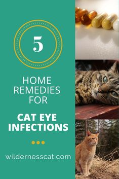 how to treat cat conjunctivitis at home