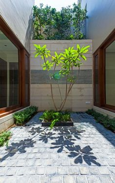patio interior con plantas y adoquines                                                                                                                                                      Más