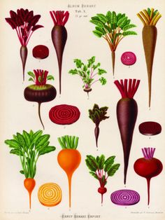 Benary Beetroot Emaille plate{allposters}