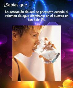 La sensacion de sed cuando falta 1% de agua ~ ¿Sabías que?