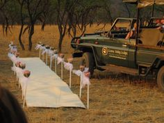 A bushveld wedding with proteas lining the aisle