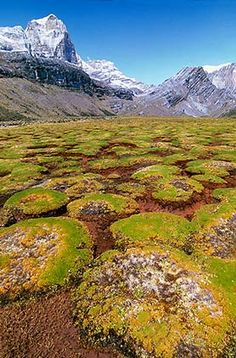 The pillow-valley got its name from the green plats that grow in Little very low bushes and look like pillows! Trip To Colombia, Colombia Travel, Beautiful Places To Visit, Wonderful Places, Places To See, Colombia South America, South America Travel, Sierra Nevada, Paisajes