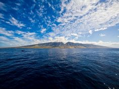 8 Great Places to go Whale Watching