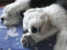 Awe!  Ssh... check out that huge paw