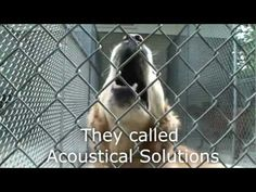 This before and after video is unbelievable: Dog Kennel Quieted by AlphaSorb Acoustical Panels