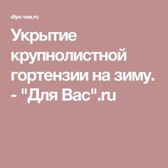 """Укрытие крупнолистной гортензии на зиму. - """"Для Вас"""".ru"""