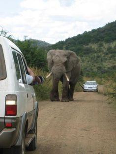 go on a african safari..