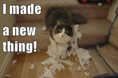 Many cat owners have come home to find the toilet paper roll shredded to pieces, scattered like snow all over the bathroom. There are many reasons that this might occur. Toilet paper is always there (or … Animals And Pets, Funny Animals, Cute Animals, Animal Funnies, Animal Memes, Funny Cat Memes, Funny Cats, Hilarious Quotes, I Love Cats