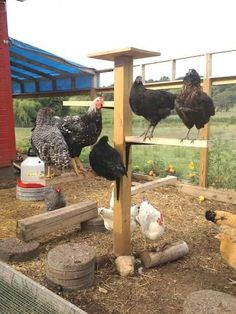 Chicken Coop - 21 Awesome DIY Projects To Upgrade Your Chicken Coop 1 Building a chicken coop does not have to be tricky nor does it have to set you back a ton of scratch. Chicken Pen, Chicken Coup, Chicken Life, Best Chicken Coop, Backyard Chicken Coops, Building A Chicken Coop, Backyard Farming, Chickens Backyard, Chicken Roost