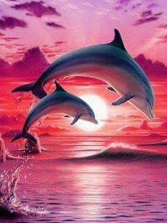 Pink sunset dolphins