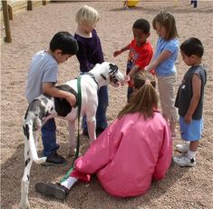 Animal-assisted therapy - Wikipedia, the free encyclopedia