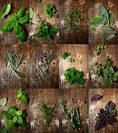 Collage of fresh herbs www.greennutrilabs.com
