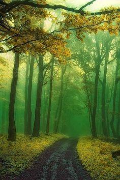 Forest Path Slovakia