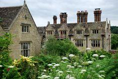 gravetye manor cenolophium denudatum