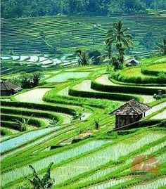 You can spread your soul over the lovely tegallalang paddy field in ubud, you can feel it , you can whisper to them, but the problem is they will not be moved.😶 WHY don't you come and see yourself? ☺  #BaliNature ❤  #BaliIsland