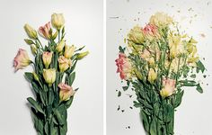 Beauty is indeed fleeting, especially when it is frozen in liquid nitrogen and smashed on a hard surface. New York photographer Jon Shireman soaked various flowers in a liquid nitrogen bath for up to 30 minutes to rocket them into a hard platform, recording their destruction with a high speed camera. The result is a mosaic out of shattered pieces, provoking questions as to our fascination with destruction, aesthetics, and dominion over nature.