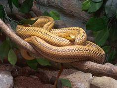 Snake at L'île aux serpents - La Trimouille, France