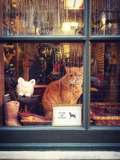 "hellowindowcat: ""Philthy Midtown Village window cat """