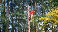 Before hiring a tree trimming service, you must do thorough research and find out the answers to all the important questions about the tree service provider. Tree Trimming Service, Tree Removal Service, Maintenance Jobs, Tree Pruning, Broken Window, Tree Care, Removal Services, Growing Tree, Home Repair