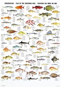 Fish of the Southern Seas
