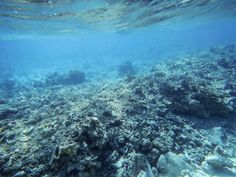 A new analysis of satellite imagery shows extensive coral reef damage in the South China Sea for the first time.