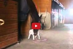 Could this pitbull pup and horse have been the inspiration behind Budweiser's awesome Superbowl commercial?!? Either way, it doesn't get much sweeter than this footage of a teeny pooch and a giant horse acting like best friends forever! Please watch and SHARE with someone special in your life! If you're a pet lover like us, [...]