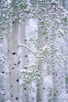 Winter *❄~*.Wishes & Dreams.*~❄*  Wintergreen