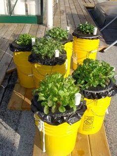 Sub-irrigated planter (SIP)