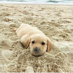 esta josando en la playa lleno de arena