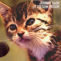 Johnny Cash would've been 81 today. thekittencovers: Johnny Cat at Kitten Prison Happy Birthday, Johnny Cash. Silly Cats, Funny Cats, Crazy Cat Lady, Crazy Cats, Beatles, Kitten Meowing, Kittens And Puppies, Pretty Cats, Pretty Kitty