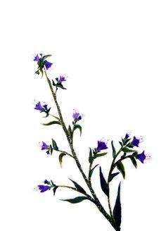 """""""Mi color de pistilos . 2014. Sumi-e – Tinta sobre seda  en  soporte rígido. 23 x 35cm. Alesso, Plants, Color, Silk, Ink, Art, Colour, Plant, Planets"""