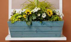 Garden feature: Cottage daises