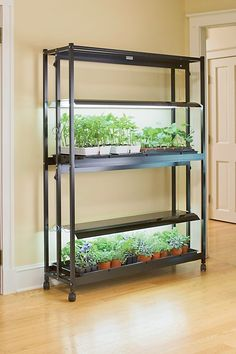Fluorescent grow light systems for seed starting, growing tomatoes indoors