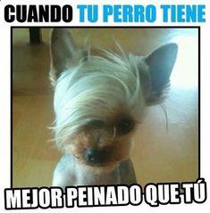 Imagenes de Humor #memes #chistes #chistesmalos #imagenesgraciosas #humor www.megamemeces.c... ➛➛ http://www.diverint.com/memes-graciosos-para-adultos-despues-de-esto-ya-no-veremos-igual-a-bumblebee