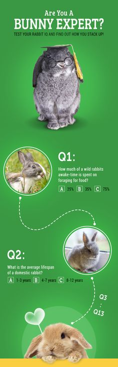 Are you a bunny expert? Take the quiz