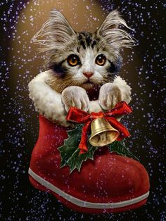 Christmas for Puss in Boots. Have a merry cat Christmas. Christmas Scenes, Christmas Pictures, Winter Christmas, Merry Christmas, Christmas Time, Xmas, Christmas Thoughts, Christmas Sock, Christmas Stocking