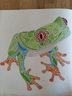 Frog #milliemarotta #tropicalwonderland #using  polychromos #by myself