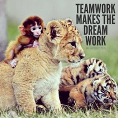 Team Work Makes The Dream Work Dog And Cat