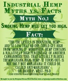 I'm convinced people believe whatever they want to, the facts of the matter don't enter into things. Psychoactive Drug, Sacred Plant, Save Our Earth, Flax Seed Recipes, Cannabis Plant, Hemp Seeds, Hemp Oil, Medical Marijuana, Weed Facts