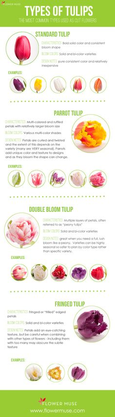 Overview of the most common types of tulips used as cut flowers - from Flower Muse Blog.