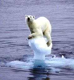 El deshielo de las capas polares, tiene consecuencias adversas en la naturaleza.