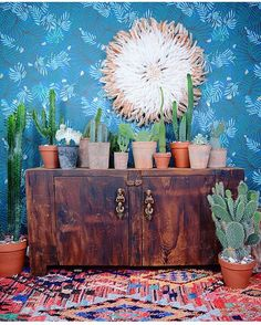 #cactus collection — gorgeous teal #ajawallpaper by incredibly talented @justinablakeney for @hyggeandwest , moroccan boujad rug from @fine_moroccan_rugs  — bamileke juju hat , #succulents — by @apartmentf15